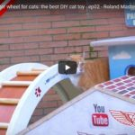 Hamsterhjul – fast till katten
