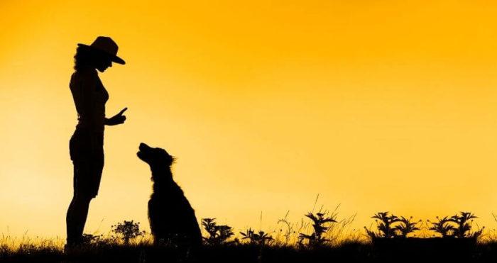 Hunden, människans bästa vän